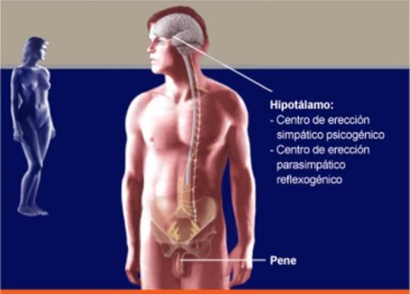 Disfunción eréctil - Clínica Urológica. Urología Salamanca. Dr. Miguel Ángel García - Prostatitis - Urólogo Salamanca